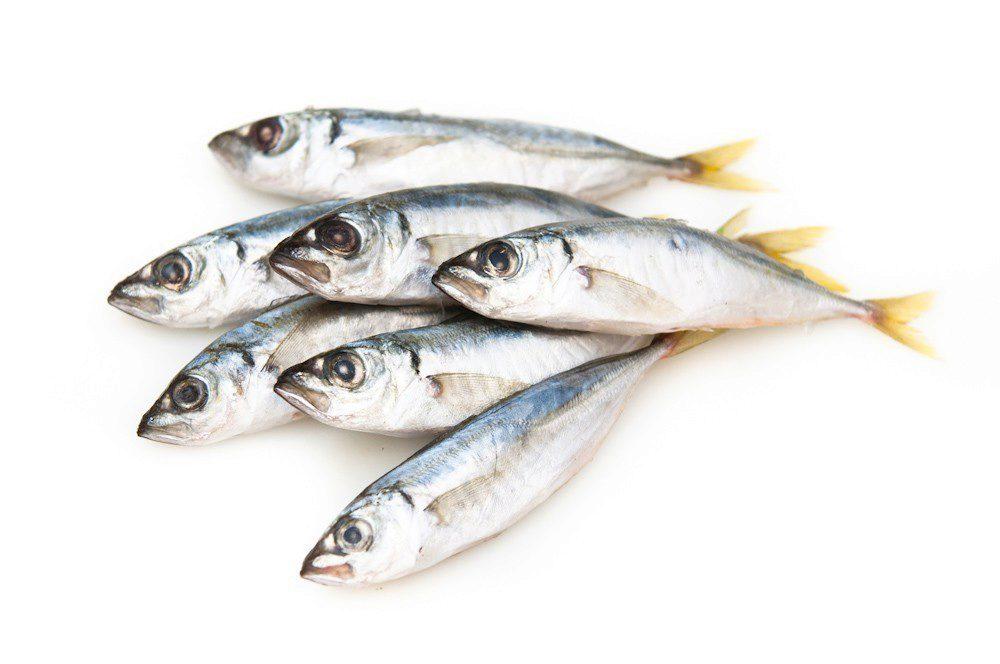 Замороженная рыба санкт петербург