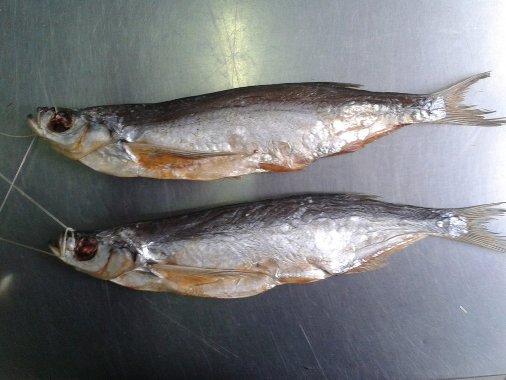синец фото рыбы